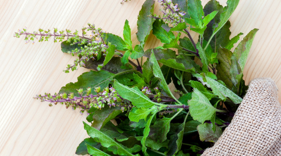 Top 5 Health Benefits of Holy Basil