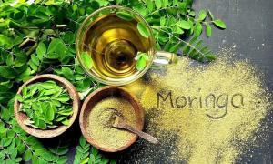 benefits of moringa new superfood koru nutrition
