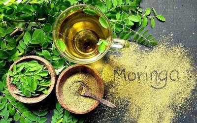 Benefits of Moringa, The New Superfood